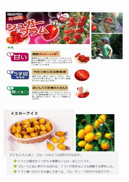 ふるーつ ミニトマト狩りチラシ②.jpg